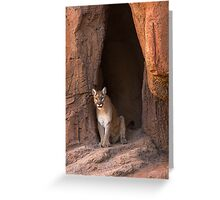 Guest of the Arizona Sonora Desert Museum Greeting Card