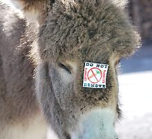 don't feed the donkey by LucilleJane