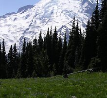 mt rainer and meadow by LucilleJane