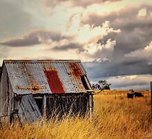 Outback Shed by wallarooimages