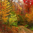 A country road by Jcook