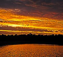 On Golden Pond by Paul Gitto