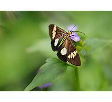 Orange Butterfly FNQ Photographic Print