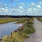 Salt Marsh Trail by murrstevens