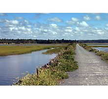 Salt Marsh Trail Photographic Print