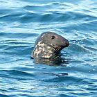 Grey Seal by yeimaya