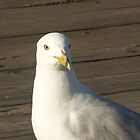 Steven Sea Gull by Bob Hardy