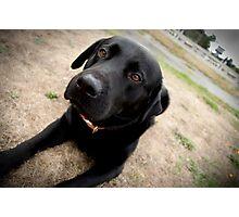 Trigger dog Photographic Print
