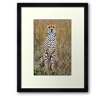 Masai Mara Treasure-Cheetah Framed Print