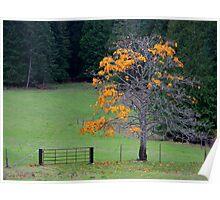 alder tree last leaves painterly Poster