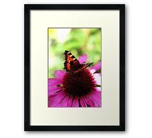 Echinacea Addiction Framed Print