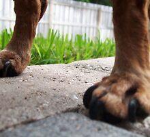 Dachshund Legs? by BayMurphy