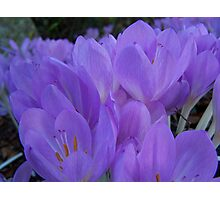 Purple Flowers In Garden Photographic Print