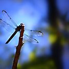 Dragonfly dreams by Earl McCall