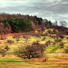 New England Apple Orchards by Monica M. Scanlan