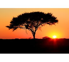 Acacia Sunrise Photographic Print