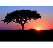 Etosha Acacia Sunrise Photographic Print