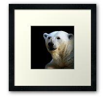 Ice bear Framed Print