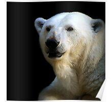 Ice bear Poster