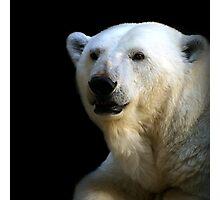 Ice bear Photographic Print