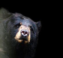 Brown bear by Bluesrose