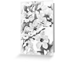 Fruit Or Flower? Greeting Card