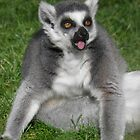 The Ring-tailed Lemur (Lemur catta) by angeljootje