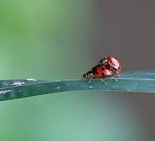 Two ladybirds by Rachael Talibart