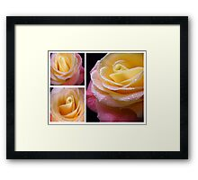 Yellow - Pink Rose. Collage. Framed Print