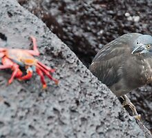 Lava Heron on the prowl by robotics