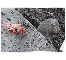 Lava Heron on the prowl Poster