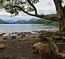 The Old Oak, Ullswater - Cumbria. UK by David Lewins