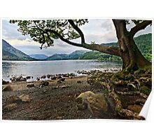 The Old Oak, Ullswater - Cumbria. UK Poster