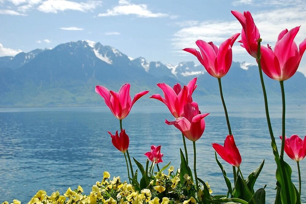 Tulips on the lakeside by Arie Koene