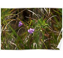 Small Flowered Gerardia Poster