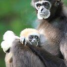 Lar Gibbon (Hylobates lar) with baby  by DutchLumix