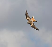 Dramatic Red Kite by markyboy1967