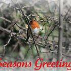 Traditional Robin Holiday Card by JoAndCoCards