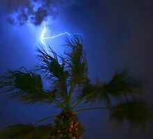 Palm Tree and Lightning by Scott Boileau