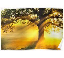 Tree basking in sunshine  Poster