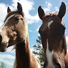 two curious horses by chasityperry