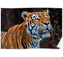 Talkin' Tiger Poster
