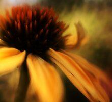Soft Focus 4 by KatsEyePhoto