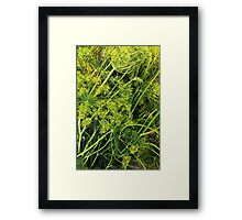Fresh Dill Framed Print