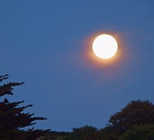 Full Moon by DEB VINCENT