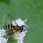 Hoverfly by art2plunder