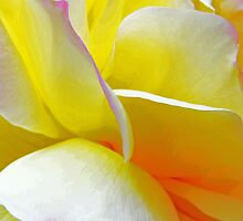 Rose Petals by Jennifer Hulbert-Hortman