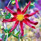 Star flower  by DIANE  FIFIELD