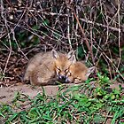 Fox Kit 6 by Michael Cummings