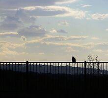 Bird on Railings by Hannah-C